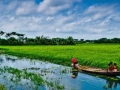 bangladesh-nature