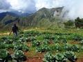 haiti-crops
